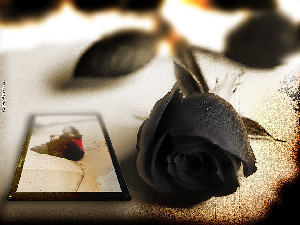 Black Rose Tumblr Background