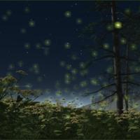 Fireflie at Night