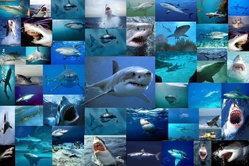 Shark Collage Twitter Backgrounds - Pimp-My-Profile.com